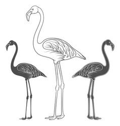 set of of flamingos vector image vector image