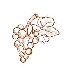 hand drawn grapes doodle style vector image vector image