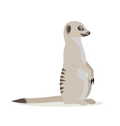african wild animal cute suricate meerkat icon vector image