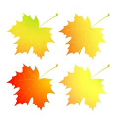 Autumn maple leaves A set vector