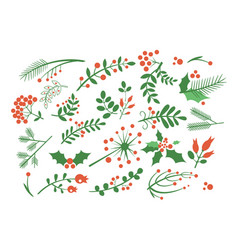 set of red rowan berries branches of fir green vector image