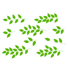 Set of tree branches with green leaves vector