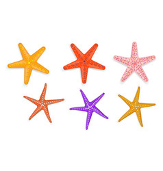set realistic starfish with various color vector image