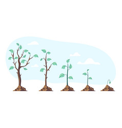 Tree plant grow steps stages period phase process vector