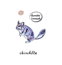 watercolor funny face grey domestic chinchilla vector image