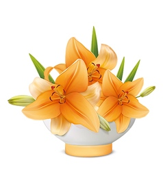 Yellow lily in white vase vector image