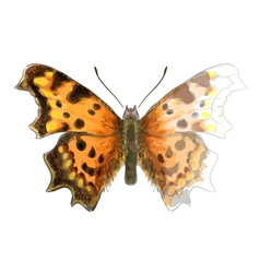 Butterfly Polygonia c-album vector image