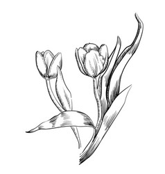 Graphic tulip hand drawn vector