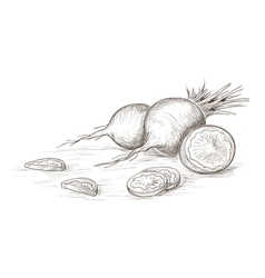 Hand drawn radish vector image
