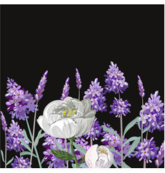 Lavender peony realistic template on black vector