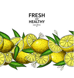 lemon border drawing citrus fruit frame vector image