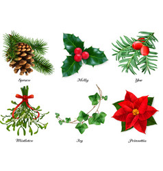 Plants christmas decorations spruce holly yew vector