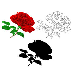 simple red rose stem with leaves natural vector image