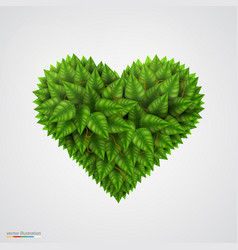 heart symbol in green leaves vector image