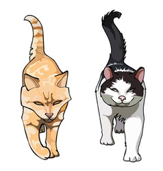 two cats with their tails up walking frontally vector image