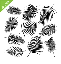 Collocetion of Palm leaves silhouettes vector