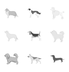 Dog breeds set icons in monochrome style Big vector