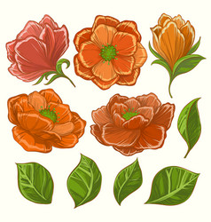 flower set vector image