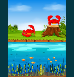 natural view with the red crab on the grass vector image