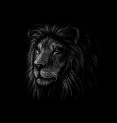 portrait of a lion head on a black background vector image