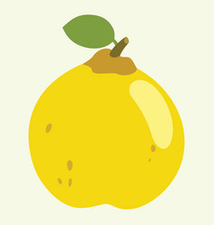 Quince vector