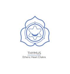 thymus - chakra human body vector image