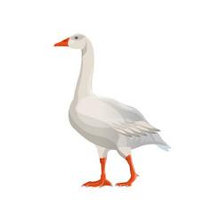 Walking white goose vector