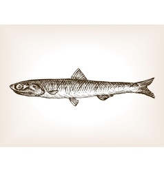 Anchovy fish sketch style vector image