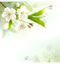 Blossoming tree branch with white flowers vector