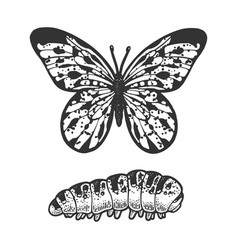 butterfly caterpillar sketch vector image