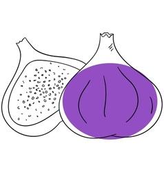 Fig ftuit vector