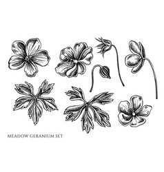 Set hand drawn black and white meadow vector
