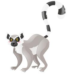 cute lemur on white background vector image