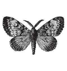 Gypsy moth vintage vector