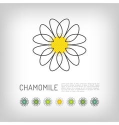 Chamomile thin line art icon isolated daisy logo vector