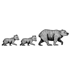 mummy grizzly bear with cubs children teddy baby vector image