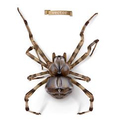 Spider 3d realistic icon vector