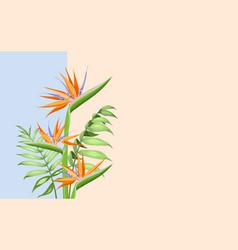 strelitzia orange tropical flower isolated on vector image