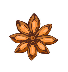 whole star anise isolated on white background hand vector image