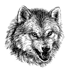 Angry wolf sketchy graphical portrait a wolf vector
