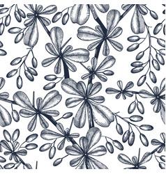 berberis seamless pattern evergreen tree vector image