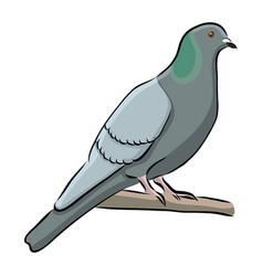 Hand drawn bird grey dove vector