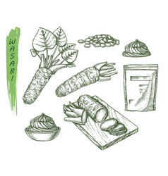 Sketch for wasabi or japanese sashimi vector