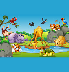 Wild animal in forest vector