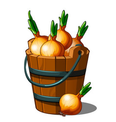 Wooden bucket full of onions autumn harvest vector