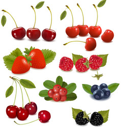 fresh berries vector image