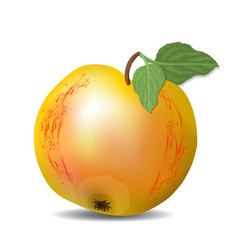 isolated yellow apple with red texture and green vector image