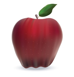 apple isolated on white vector image vector image