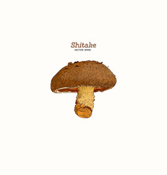 Collection shiitake mushroom and a bit of vector