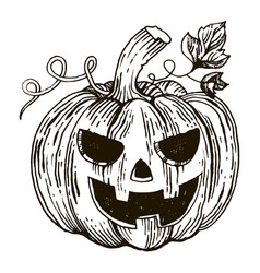 halloween pumpkin engraving style vector image